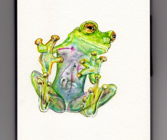 Doodlewash of Glass Frog - translucent frog in watercolor lime green