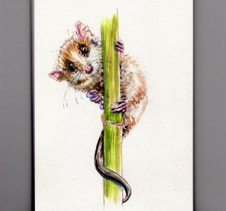 The Monito Del Monte - Doodlewash watercolor sketch of colocolo opossum, Dromiciops gliroides nearly endangered species