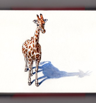 Day 2 - #WorldWatercolorGroup A Visit to the Zoo animal young baby giraffe on white background