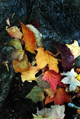 Unexpected Autumn
