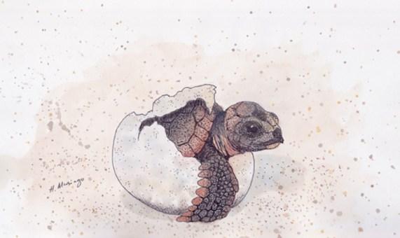 #WorldWatercolorGroup - Watercolor by Heather Musingo of baby turtle - #doodlewash
