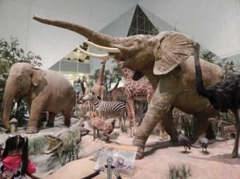 State Darwin Museum - Art
