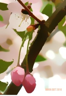 Doon art pink blossom blur
