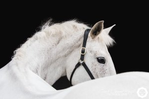 at liberty horse photo shoot