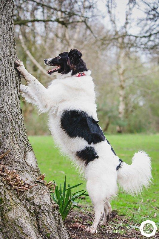Dog photo in marbury park