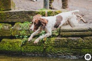 dog jumping into the lake at marbury park