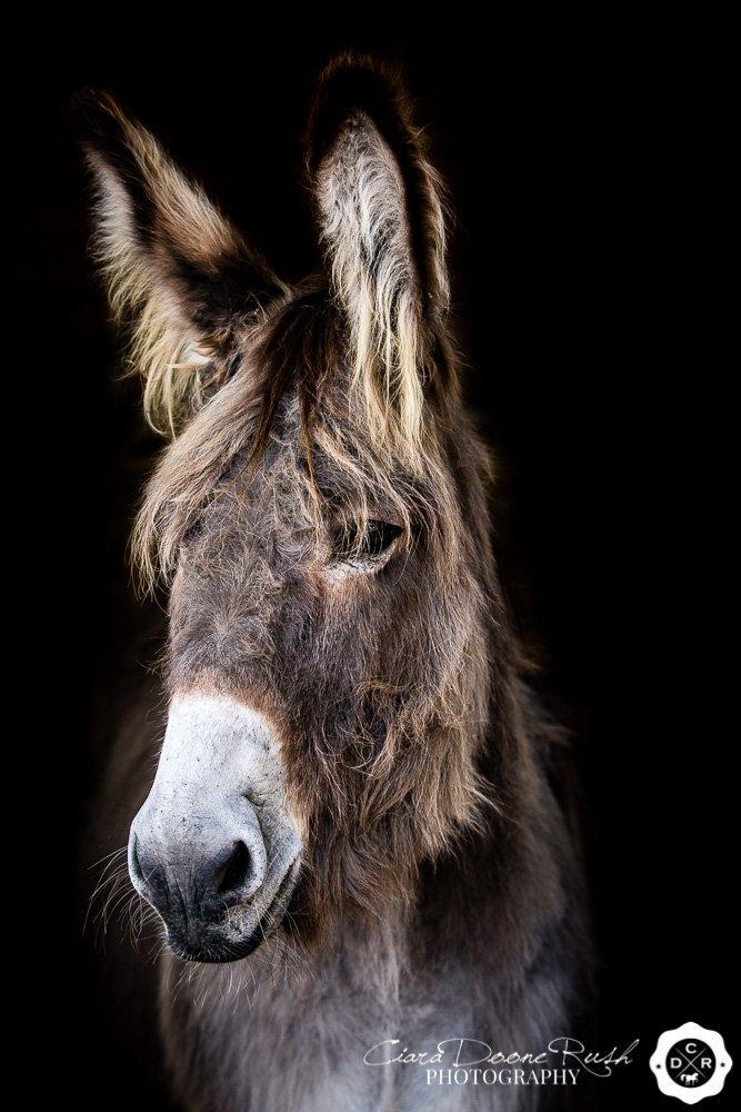 Donkey Studio Photo Shoot