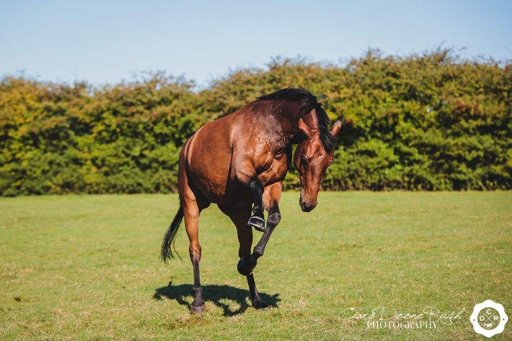 a remember me horse photo shoot