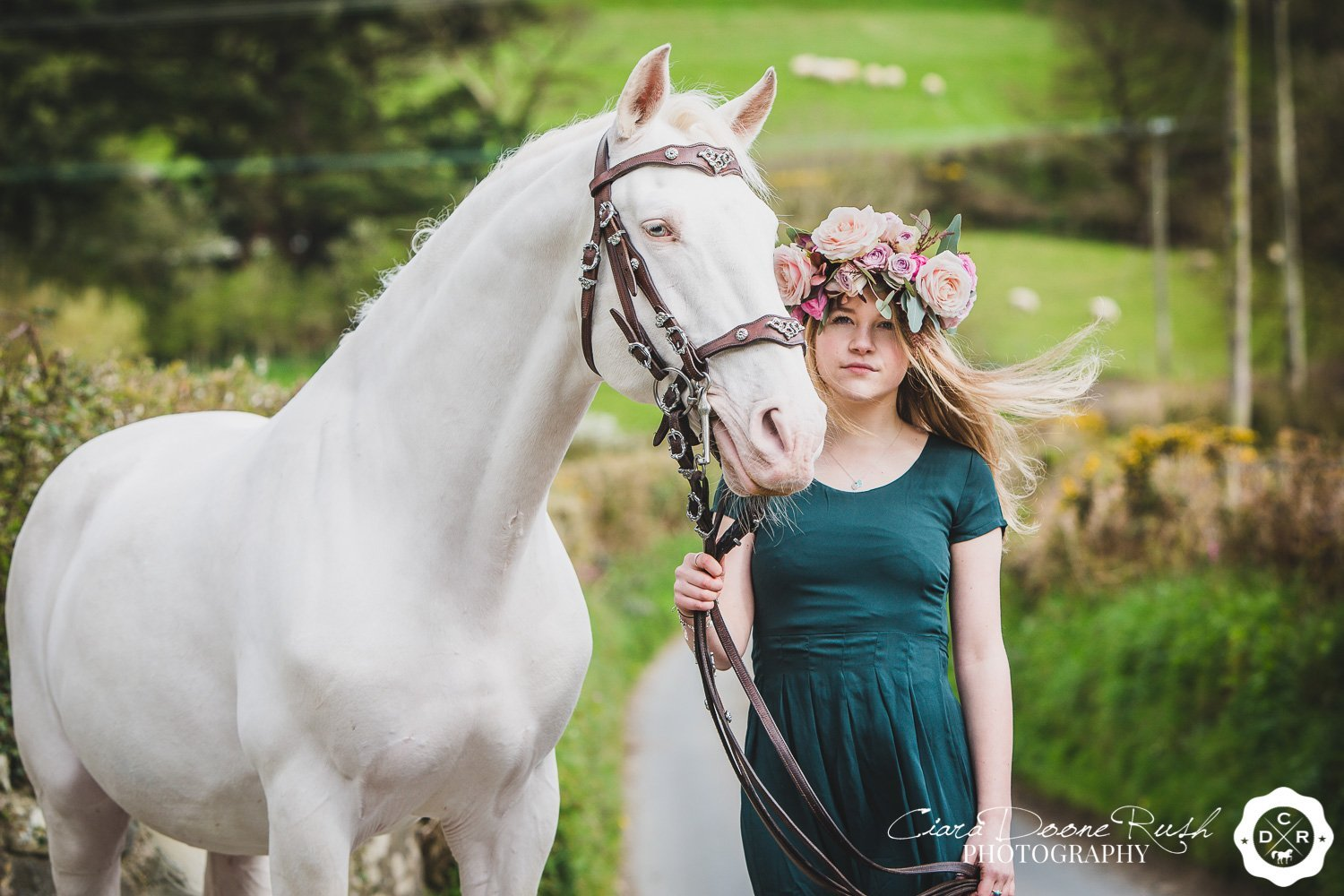 horse photo shoot in north wales