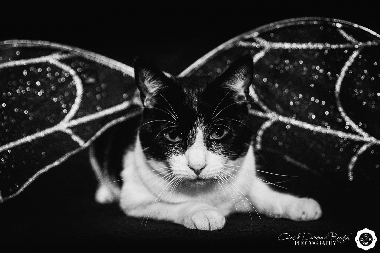 Barry the Halloween Cat