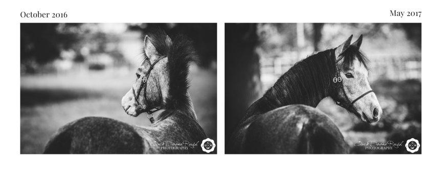 a foal mini shoot series