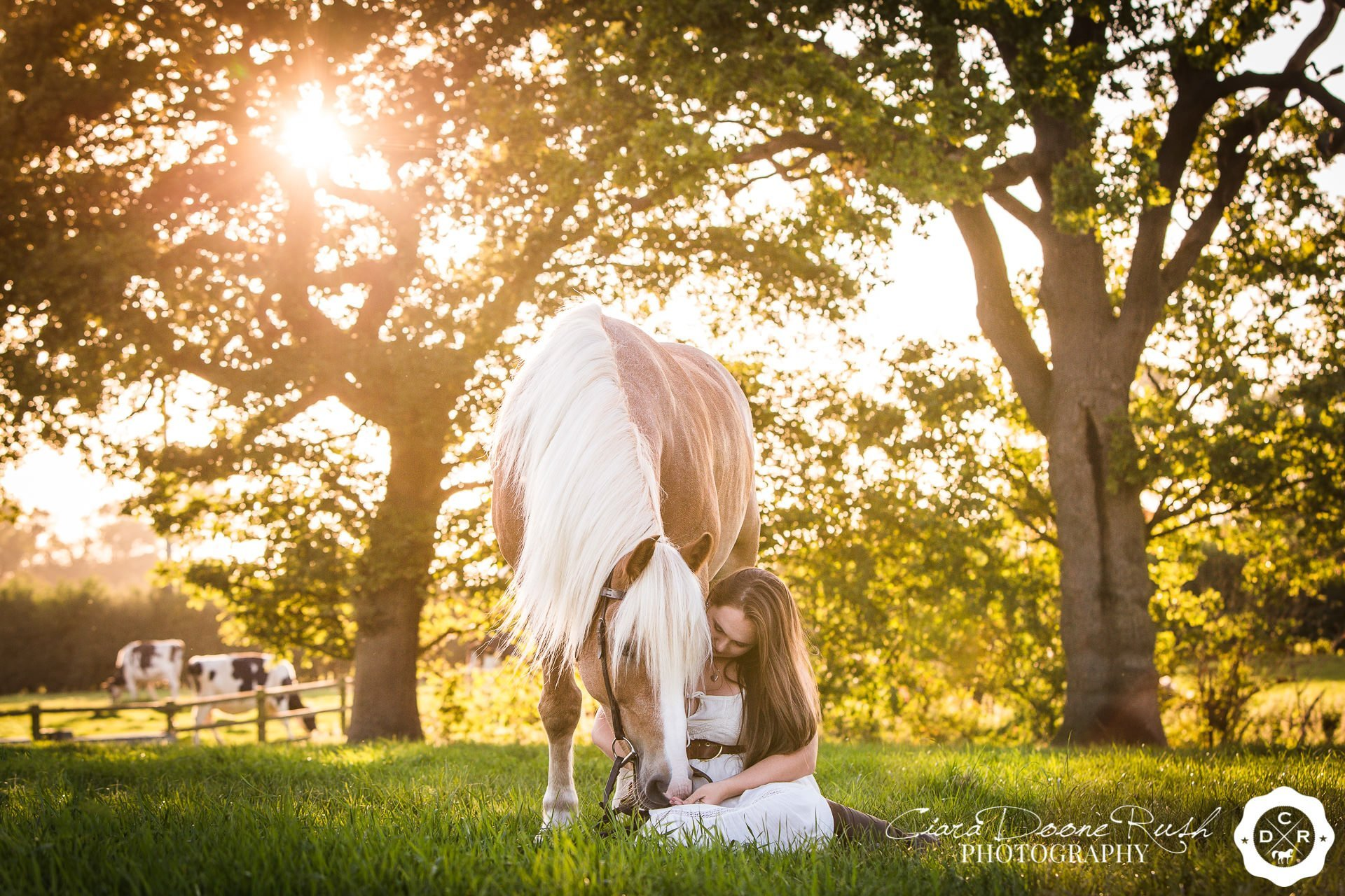 A girl and her horse in the evening sun on a horse and rider photo shoot