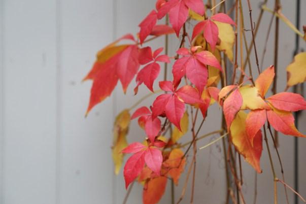 161104-autumnincamberwell4