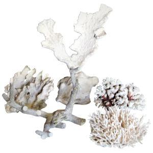 Antique Coral Specimen Collection
