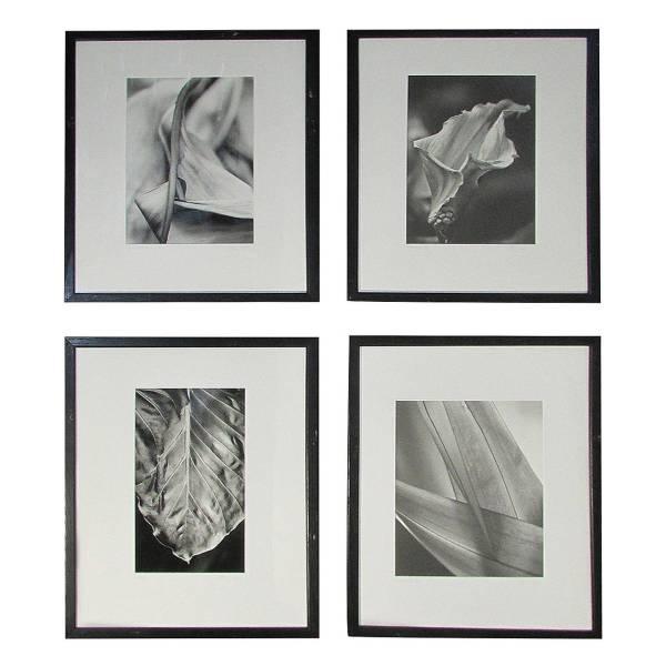 Erotic Flora Fauna Photographs Style of Robert Mapplethorpe