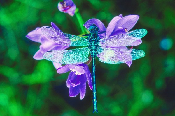 Beautiful Colorful Dragonflies