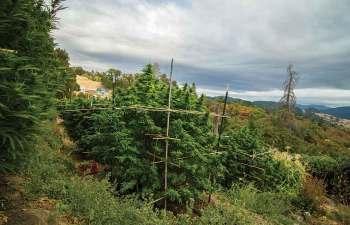HAPPYDAY FARMS: Homestead Cannabis 1