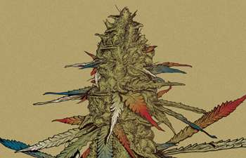 CHAMPIONING THE POLITICAL ARENA: Four Politicians Brave the Cannabis Legalization Front Lines 3