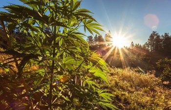 Pilot Farms Sustainable Cannabis