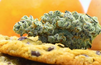 Mandarin Cookies by A Cut Above Dispensary