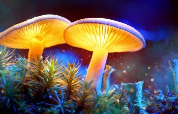 The Puget Sound Mycological Society: Embracing the Magic of Mushrooms