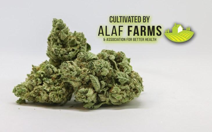 GG4 by Alaf Farms