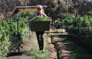 Q&A with Julia Jacobson of Aster Farms