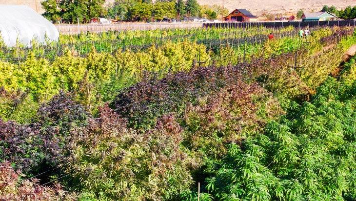 Puffin Farms - Yakima, WA
