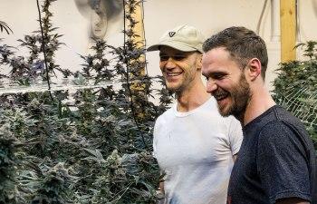 Burk Brothers Cannabis Company