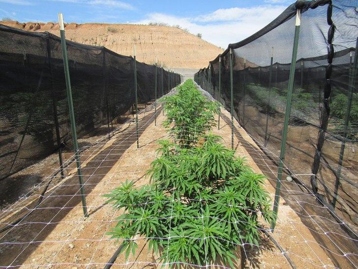Harvest of AZ - Camp Verde, AZ