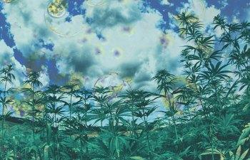 CRISPR Cannabis