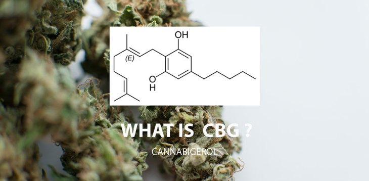 10 Things You Didn't Know About CBG (Cannabigerol)