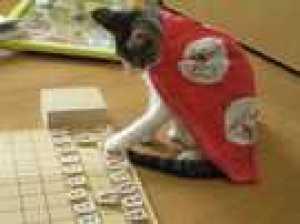 かわいい猫画像-将棋
