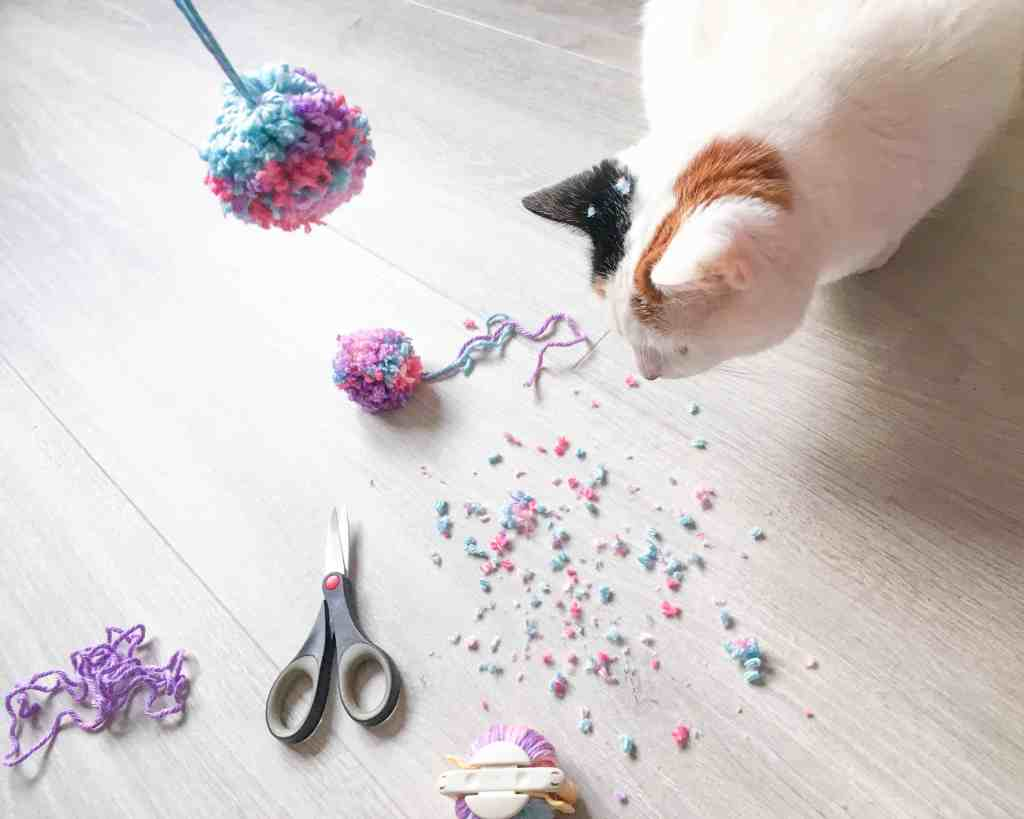 Cat getting involved with pom pom making yarn fluff and scissors