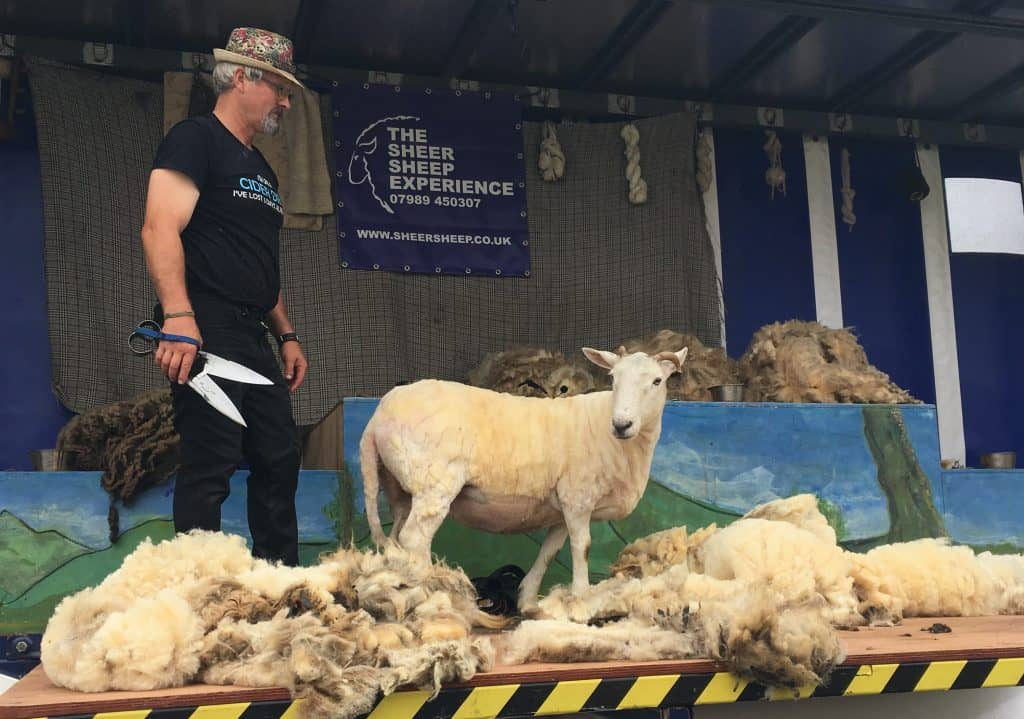 Sheep shearing at fibre east