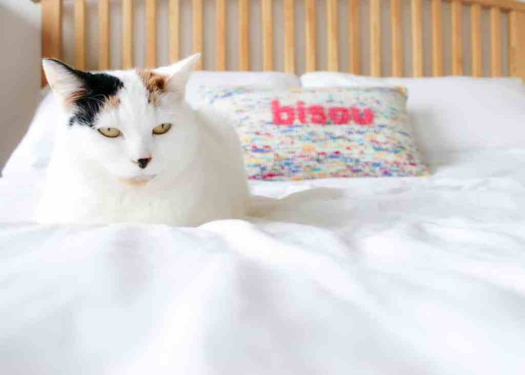 Cat sat on a bed with white sheets and a multi colour crochet pillow in the background reads 'bisou' in pink lettering