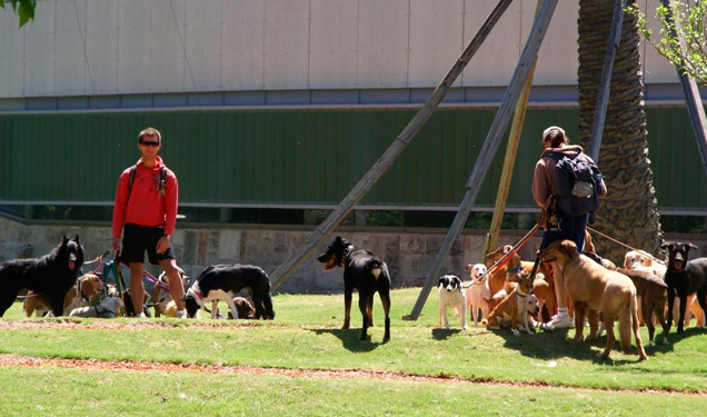 perros-plaza