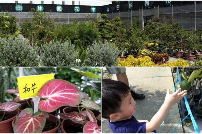 台灣北部花市推薦 | 【上田休閒花市】園藝用品多 花卉種類多 價格親民