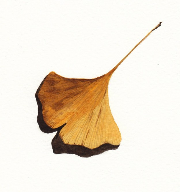 Autumn ginkgo leaf