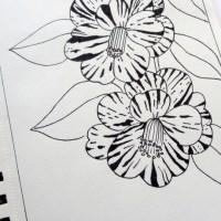 Camellias - Sketchbook 2/2017