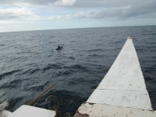 Pamilacan Dolphin-Watching
