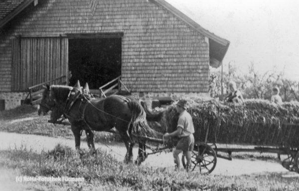 Heu einfahren - Heuernte - beom Vorderstockhammer-Bauern in Stockham - Gmd. Anger