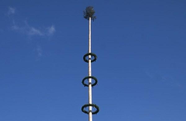 Maibaumaufstellen in Teisendorf bei sprichwörtlich weiß-blau-bayerischem Himmel