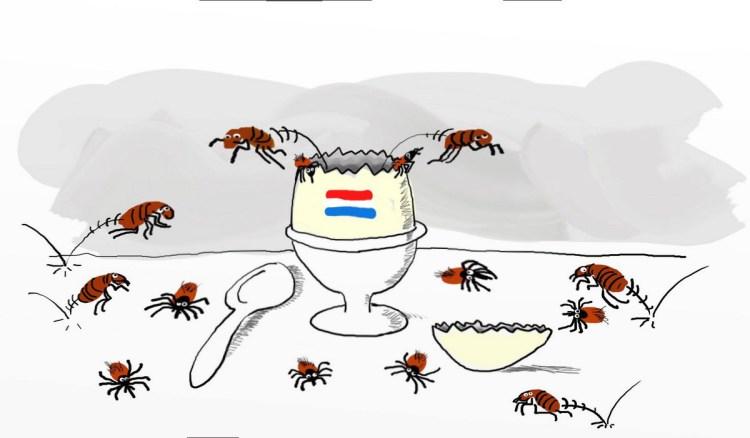 Holländische Zeckeneier