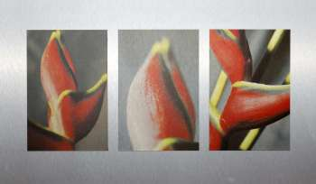 exotoc blossom | play|of|art by jan oechler