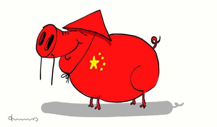 China Schwein