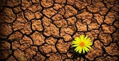 ser resiliente- resiliencia