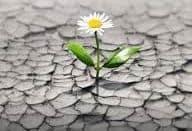 duelo crecimiento y resiliencia