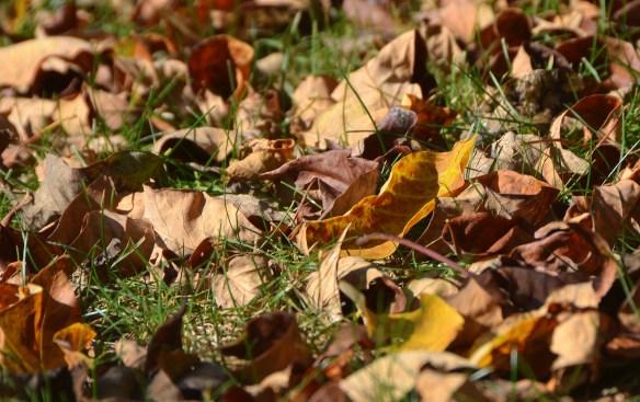 fall (9)