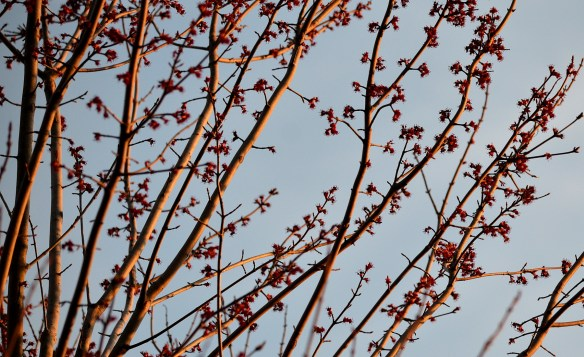 A Pretty Spring Day (14)